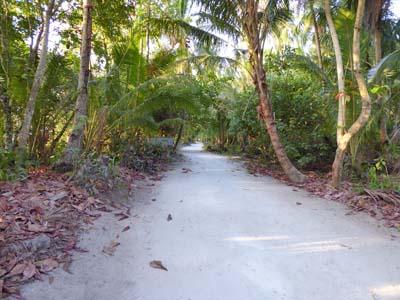 浜沿いの小道
