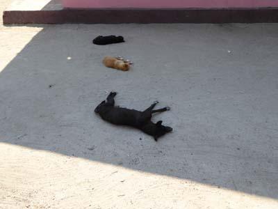日陰で昼寝する犬