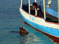 馬も海で水浴び