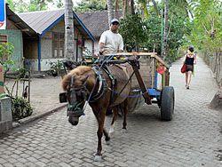 島内の交通機関:馬車