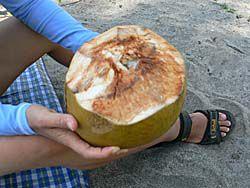 椰子の実の押し売り