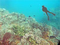 海とダイバーのイメージ画像