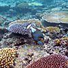 ヤサワ諸島周辺の海の中
