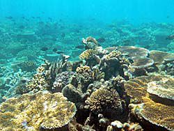 大量の魚と珊瑚