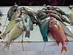 市場に並んだ熱帯魚