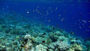 バンダ アイ島の海