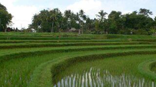 インドネシア バリ島の棚田