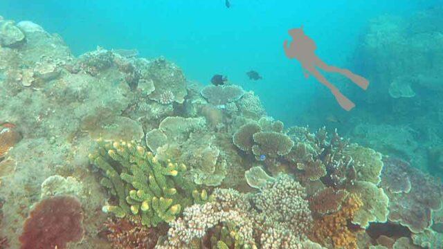 水中写真とダイバー