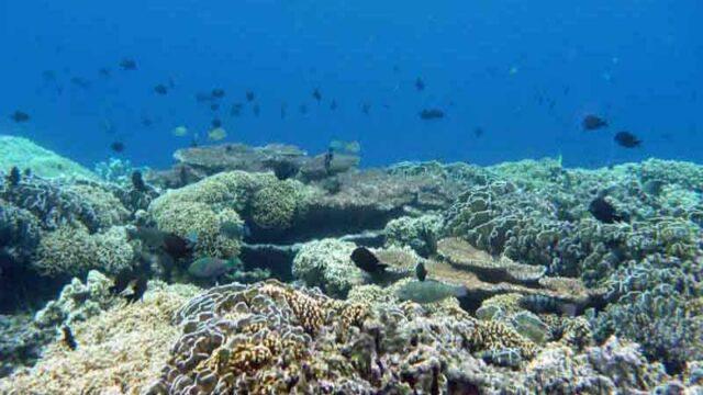インドネシア バンダ島の海