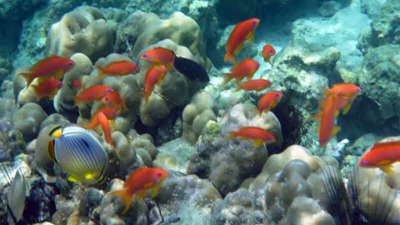 インドネシアウェー島の海の中