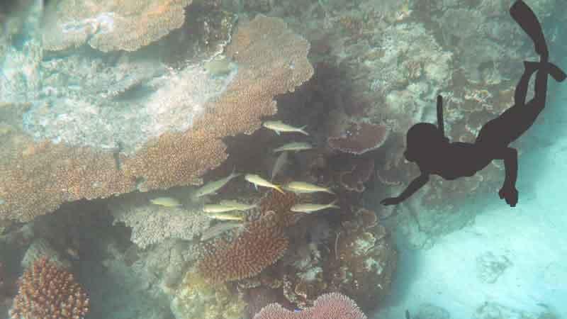 海に潜っている写真