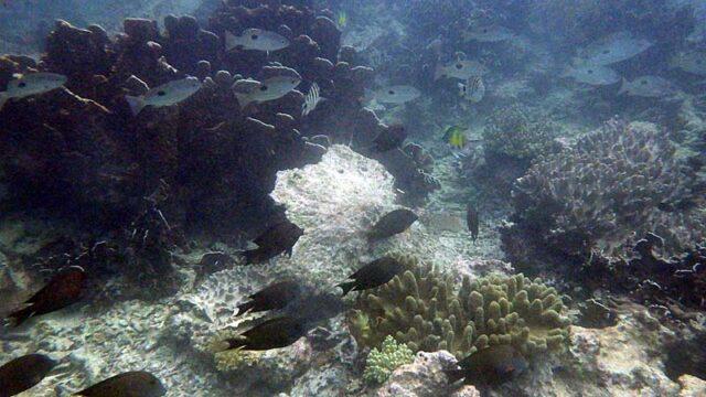 インドネシア セラム島 オラビーチリゾートの前の水中写真